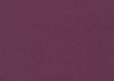 Grape IND-8404