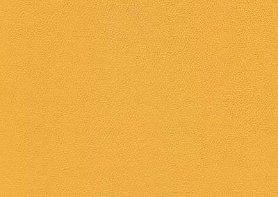 Sunflower IND-8421